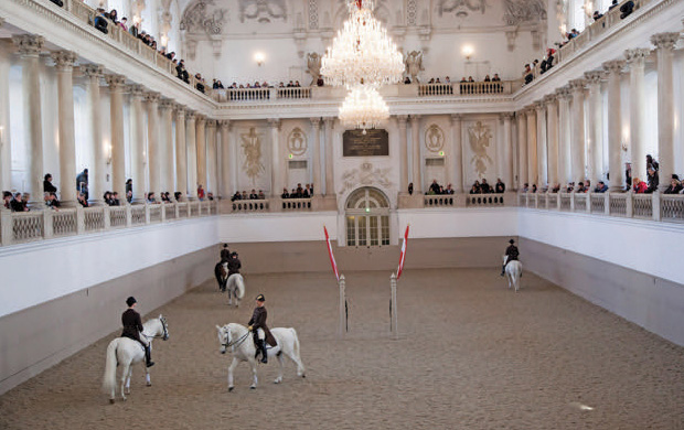 Lipizzaner Stallions at Spanish Riding School in Vienna