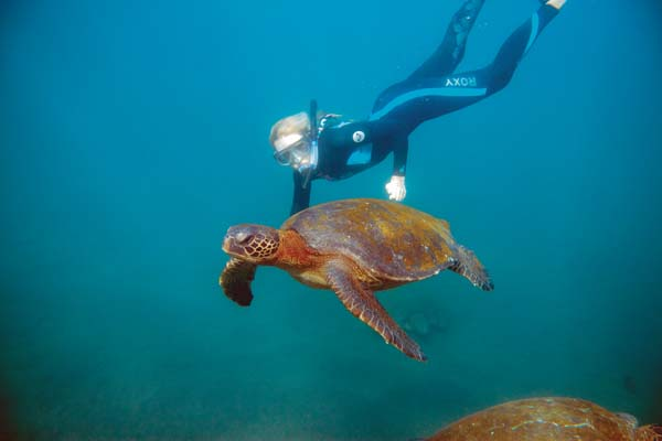 Snorkel with Sea Turtle