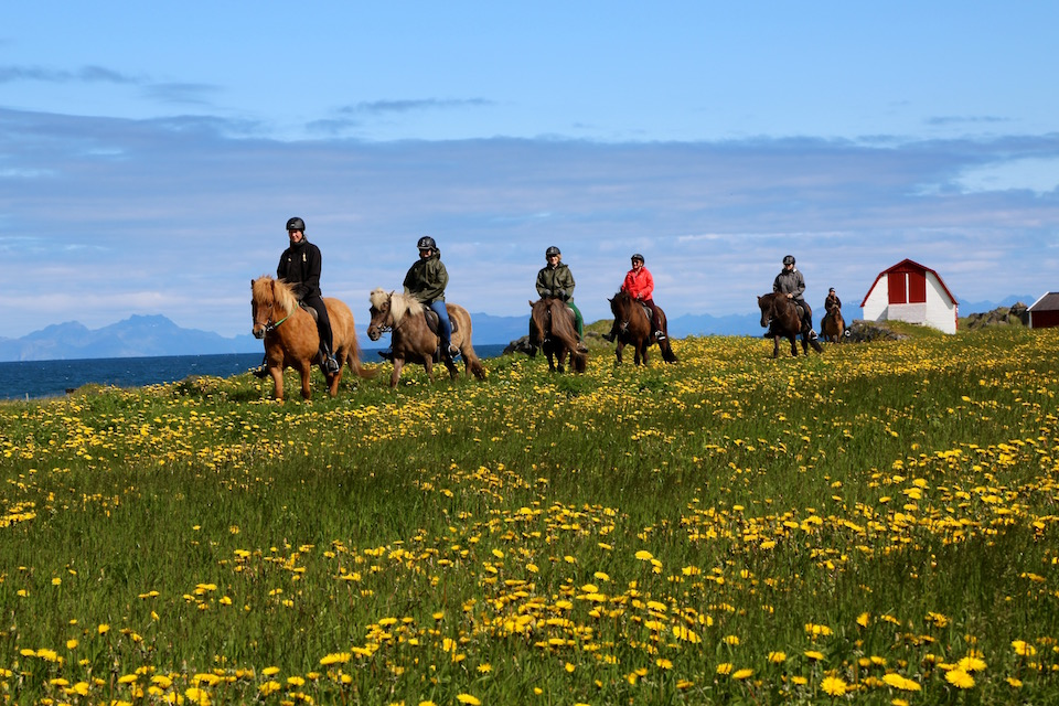 Riding Icelandic Horses at  Hov Hestegard Lofoten Norway